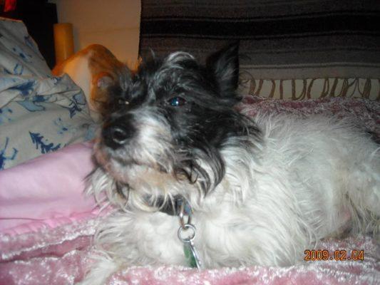 Charlie in 2009